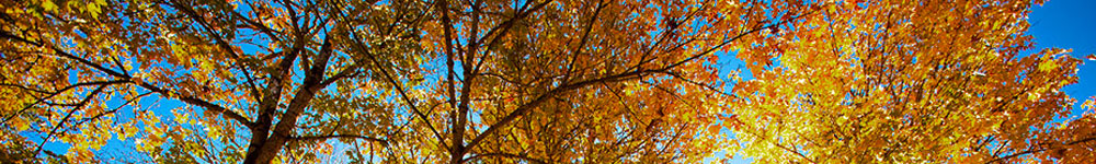 image of leaves in autumn in Wantage Township